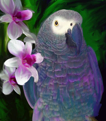 African Grey  Poster by Julianne  Ososke