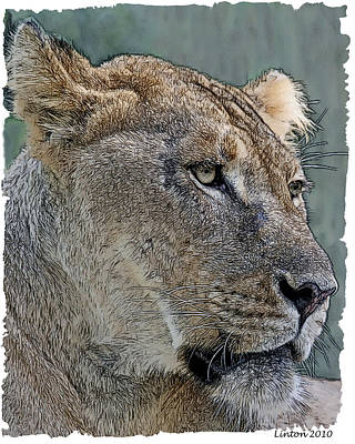 African Lioness Poster by Larry Linton