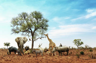 African Safari Animals Meeting Together Around Tree Poster by Susan Schmitz