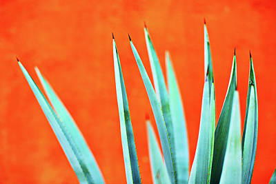 Agave 2 Poster