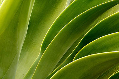 Agave Poster by Eric Foltz