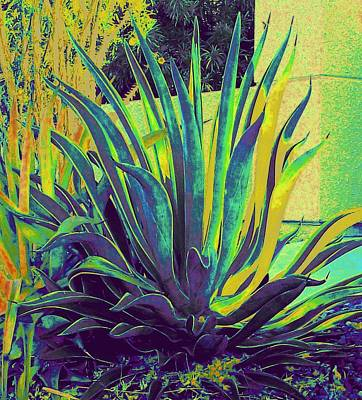 Agave Maria Poster