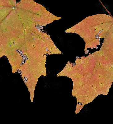 Aging Couple Of Leaves Poster by Jean Noren