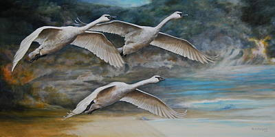 Ahead Of The Storm - Trumpeter Swans On The Move Poster by Rob Dreyer