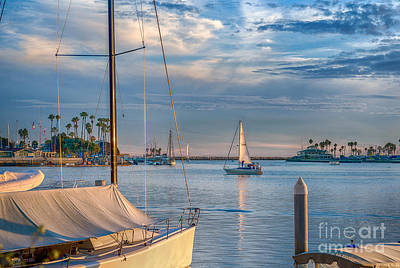 Alamitos Bay Inlet Sailboat Poster by David Zanzinger