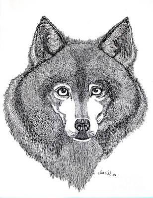 Alaskan Husky Poster