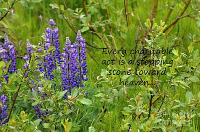 Alaskan Lupine Heaven Poster by Diane E Berry