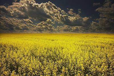 Alberta, Canada A Canola Field Under Poster by Darren Greenwood