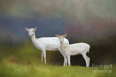 Albino Deer Poster