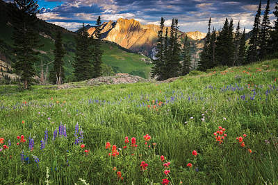 Albion Basin Wildflowers Poster