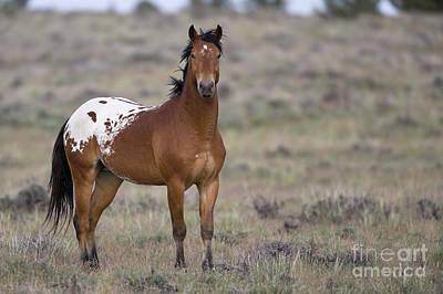 Alert Young Mustang Poster