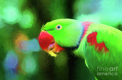 Alexandrine Parrot Poster by Genevieve Vallee