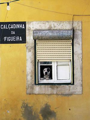 Alfama Dog In Window - Calcadinha Da Figueira  Poster