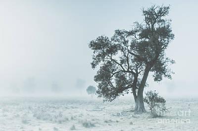 Alleena Winter Landscape Poster