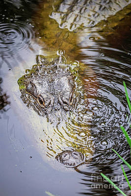 Alligator Blowing Bubbles Poster