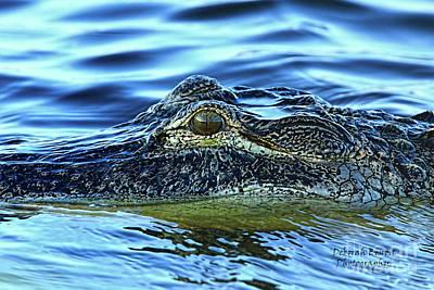 Alligator Eye Poster