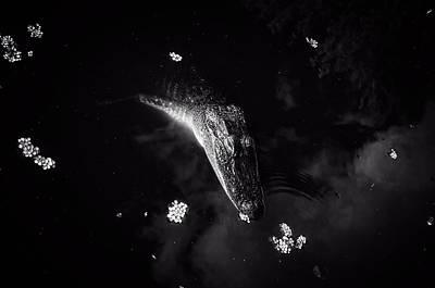 Alligator Float Poster