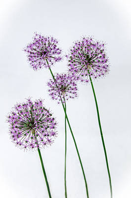 Alliums Standing Tall Poster