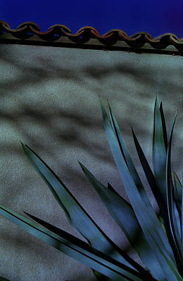 Aloe Cool Poster
