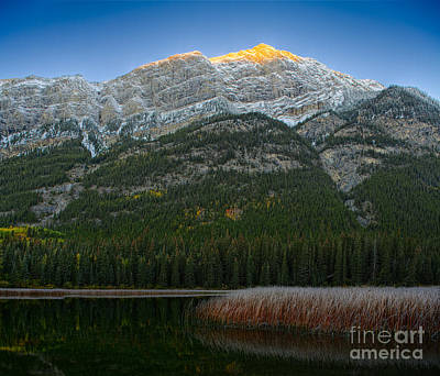 Alpenglow Over Frosty Reeds Poster