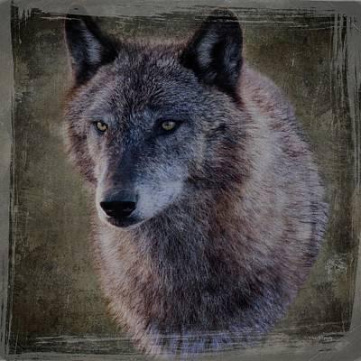 Alpha Wolf Portrait Poster