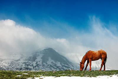 Alpine Equine Poster by Todd Klassy