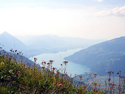 Alpine Flora On Top Of Schynige Platte Poster