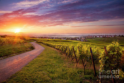 Alsace Dawn Poster
