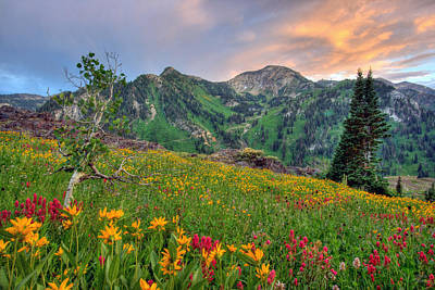 Alta Wildflowers And Sunset Poster