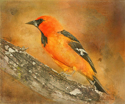 Poster featuring the photograph Altamira Oriole by Bellesouth Studio