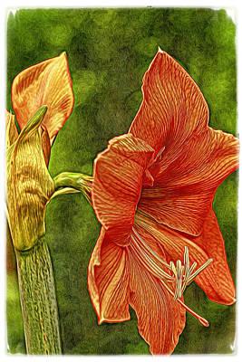 Amaryllis Art Poster by Geraldine Scull