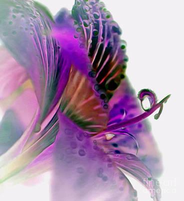 Amaryllis Butterfly II Poster by Krissy Katsimbras