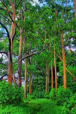 Amazing Rainbow Eucalyptus Poster