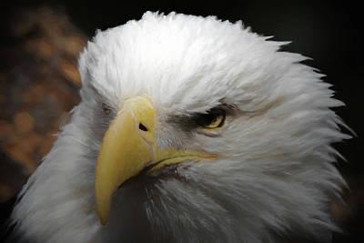 Poster featuring the digital art American Bald Eagle Portrait 3 by Ernie Echols