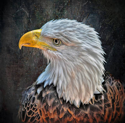 Poster featuring the photograph American Bald Eagle by Savannah Gibbs