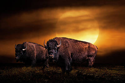 American Buffalo Under A Super Moon Poster