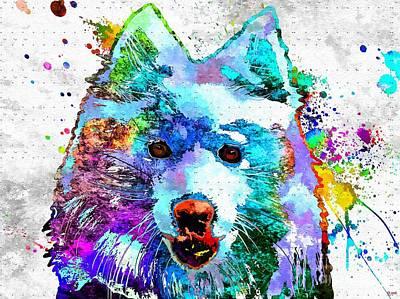 American Eskimo Dog Grunge Poster