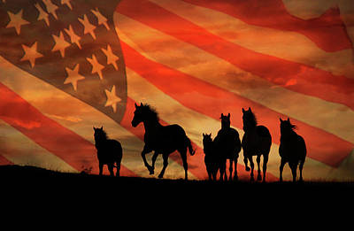 American Mustangs Poster by Stephanie Laird