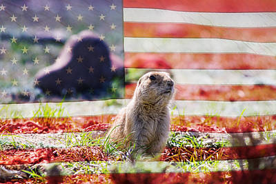 American Prairie Dog Poster by James BO  Insogna