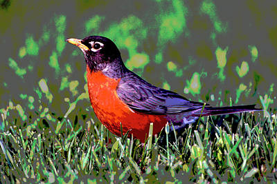 American Robin Poster by Charles Shoup