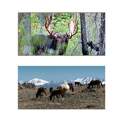 American Wild Animals Horses Mustangs Moose Deer Poster by Navin Joshi