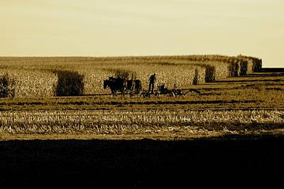 Amish Cornfield In Shadows Poster