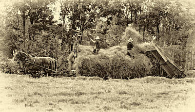 Amish Harvest 2 - Sepia Poster by Steve Harrington