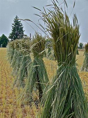 Amish Harvest Poster