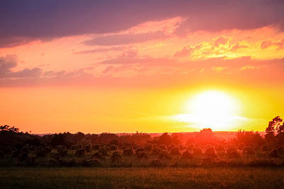 Amish Hayfield Sunset Poster by Leslie Sessums