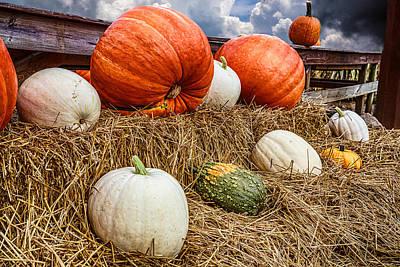 An Assortment Of Gourds Poster