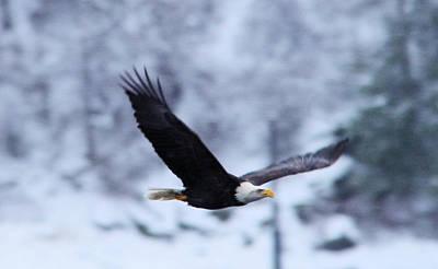 An Eagle Through Th Snowy Air Poster