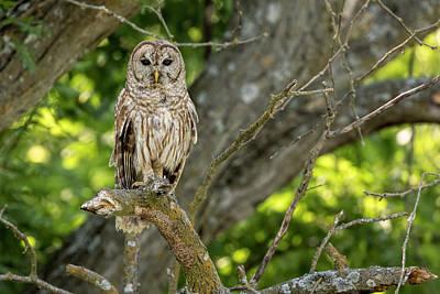 Poster featuring the photograph An Owl's Gaze by Scott Bean