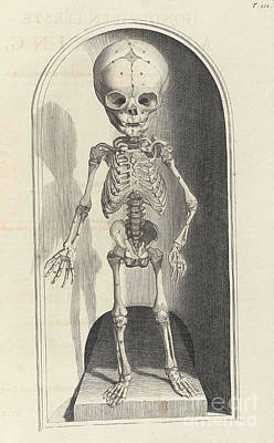 Anatomia Humani Corporis, Table 101 Poster