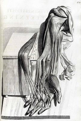 Anatomia Humani Corporis, Table 67, 1690 Poster